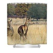Red Deer 7 Shower Curtain
