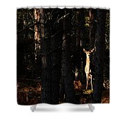 Red Deer In The Woods Shower Curtain