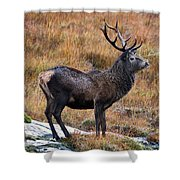 Red Deer Stag In Autumn Shower Curtain