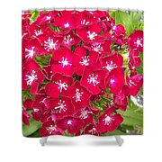 Red Dianthus Shower Curtain