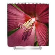 Red Disco Belle Hibiscus Painting Shower Curtain