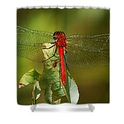 Red Dragon Fly Shower Curtain