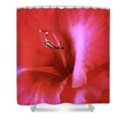 Red Dragon Gladiola Flower Shower Curtain