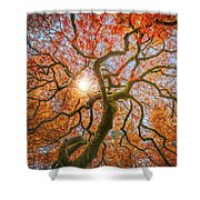 Red Dragon Japanese Maple In Autumn Colors Shower Curtain
