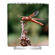 Red Dragonfly II Shower Curtain