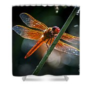 Red Dragonfly On Reed Shower Curtain