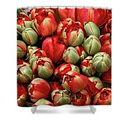 Red Elegant Blooming Tulips  Shower Curtain