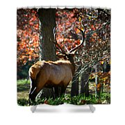 Red Elk Shower Curtain