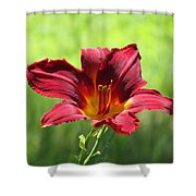 Red Escape Shower Curtain