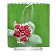 Red Everlasting At Amatzia Forest -1 Shower Curtain