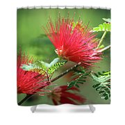 Red Explosion Shower Curtain