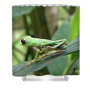 Red Eyed Tree Frog On A Leaf Shower Curtain
