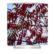 Red Fall Colors Shower Curtain