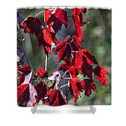 Red Fall Leaves In The Sun Shower Curtain