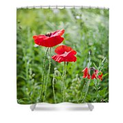 Red Field Poppies Shower Curtain