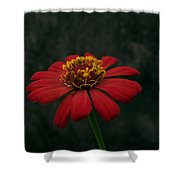 Red Flower 5 Shower Curtain
