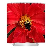 Red Flower And Bee Shower Curtain