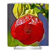 Red Flower At Pilgrim Place  In Claremont-california Shower Curtain