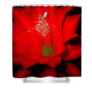 Red Flower For You Shower Curtain