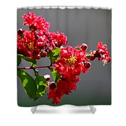 Red Flowers After The Rain Shower Curtain