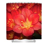 Multiple Red Flowers In Bloom Shower Curtain