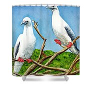 Red Footed Booby #255, Shower Curtain