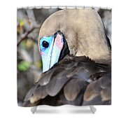 Red Footed Booby Shower Curtain