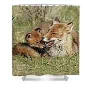 Red Fox Cub Love Shower Curtain