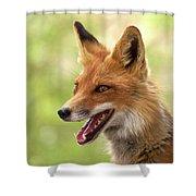 Red Fox Shower Curtain