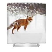 Red Fox In Winter Wonderland Shower Curtain