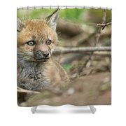 Red Fox Kit Shower Curtain by Everet Regal