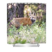 Red Fox Kit Looking For Mom Shower Curtain