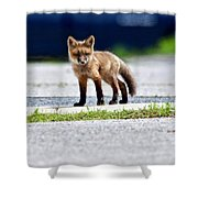 Red Fox Kit On Road Shower Curtain