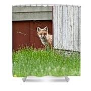 Red Fox Kit Peaking Around Old Barn Shower Curtain