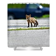 Red Fox Kit Standing On Old Road Shower Curtain