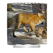 Red Fox Mommy And The Cutest Puppy Shower Curtain