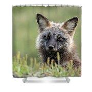 Red Fox Morph Shower Curtain