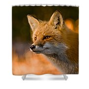 Red Fox Pictures 118 Shower Curtain