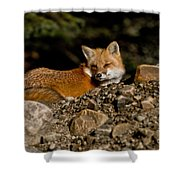 Red Fox Pictures 126 Shower Curtain