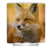 Red Fox Pictures 131 Shower Curtain