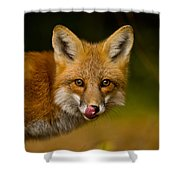 Red Fox Pictures 157 Shower Curtain