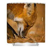 Red Fox Pictures 164 Shower Curtain