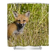 Red Fox Pictures 19 Shower Curtain