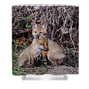 Red Fox Pictures 65 Shower Curtain