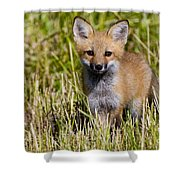 Red Fox Pictures 7 Shower Curtain
