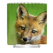 Red Fox Pup Shower Curtain