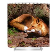 Red Fox Resting Square Shower Curtain