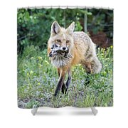 Red Fox Vixen Brings Home A Meal Shower Curtain