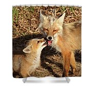 Red Fox Vixen With Pup On Hecla Island In Manitoba Shower Curtain