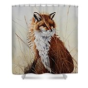 Red Fox Waiting On Breakfast Shower Curtain